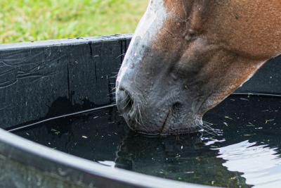Hoe bescherm ik mijn paard tegen de hitte?